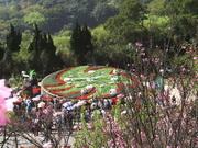 陽明山國家公園。賞櫻