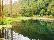 【台灣觀光巴士】宜蘭福山植物園生態之旅