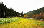梨山自然生態探索之旅3日遊