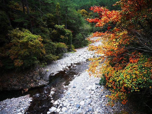 武陵國家森林遊樂區-FACECHIU