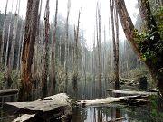 森林漫遊好舒服