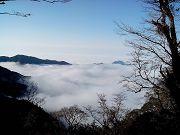 新竹雪霸巨木森呼吸