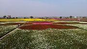 綠野花海米豆新風情一日遊