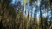 八仙山國家森林遊樂區步道群