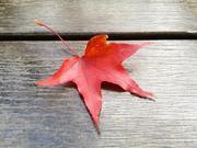 紅葉之行【鹿鳴→池上】