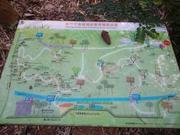 高峰植物園。桐花步道
